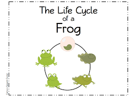 frog images for kids free download clip art free clip art on
