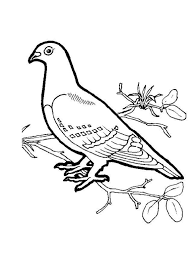 bird coloring page dove animal coloring pages of pagestocoloring