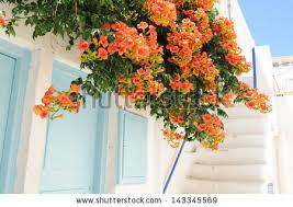 port orange florist orange flowers classic white house stock photo 143345569