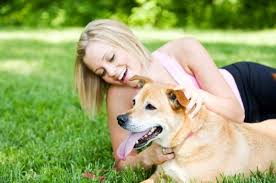How To Get A Comfort Dog College Students Find Comfort In Their Pets During Hard Times