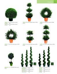 Topiary Outdoor Decorating Beautiful Topiaries For Outdoor Modern Garden