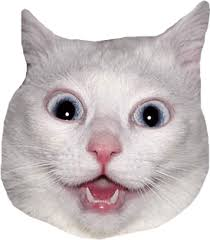 White Cat Meme - white cat head meme transparent png stickpng