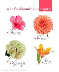 Flowers Of The Month List - the 25 best august flowers ideas on pinterest august wedding