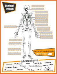 skeletal system worksheet high free worksheets library
