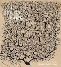 beautiful brain the stunning drawings of neuroscience founding