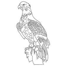 20 cute eagle coloring pages
