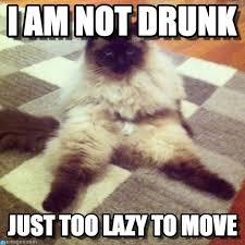 Drunk Cat Meme - i am not drunk cat meme cat planet cat planet