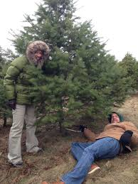 cutting down christmas trees missing moe