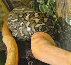 snakes dine live travel