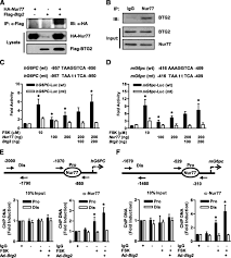 Anti Flag Antibody B Cell Translocation Gene 2 Regulates Hepatic Glucose Homeostasis