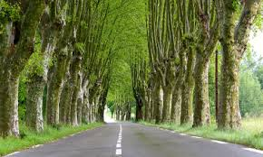 s famed roadside trees could chop the local