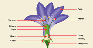 Style Flower Part - parts of a flower virtual kidspace