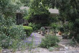 native texas landscaping plants rock oak deer ragna u0027s garden part two xeriscape front yard