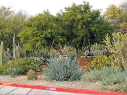 native plants in claremont pacific horticulture society a surprising landscape at pitzer