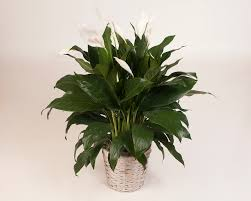indoor plants photos tropical distributors inc
