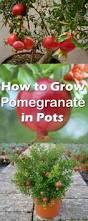 best 25 fruit garden ideas on pinterest fruit plants