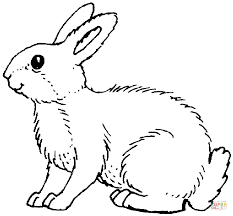Rabbits Coloring Pages Free Coloring Pages Rabbit Colouring Page