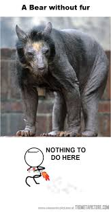 Hairless Bear Meme - hairless bear the meta picture