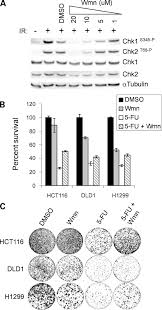loss of ataxia telangiectasia mutated u2013 and rad3 related function