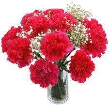 carnations flowers carnations flowers hot pink carnations fresh flowers free uk