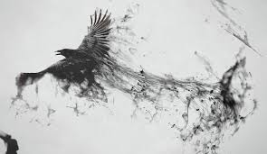 wallpaper artwork bird of prey eagle beak feather wing