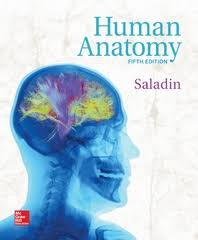 Human Anatomy And Physiology Marieb 5th Edition Textbook Rental Rent Human Anatomy And Physiology Textbooks From