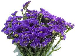 statice flowers 50 best statice en limonium images on floral