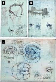 sketches by leonardo da vinci on the anatomy of the brain a the