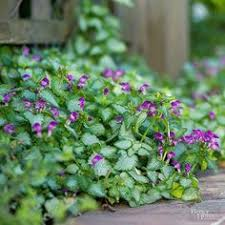 best plants for rock gardens rock garden plants spring it and