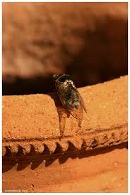cigale lizaduboutdumonde la provence de lulu pinterest