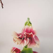 Hanging Flowers Hanging Flower Streamers Martha Stewart Weddings