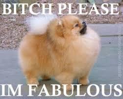 I Am Fabulous Meme - bitch i m fabulous know your meme
