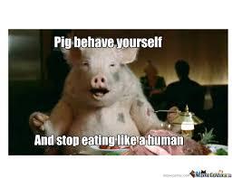 Funny Pig Memes - pig meme and humor