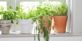 Kitchen Herb Pots How To Make Rustic Kitchen Herb Containers
