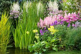 planting combination ideas