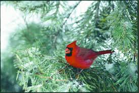 Backyard Birds Store by The 3 Ways To Welcome Winter Birds To Your Backyard The