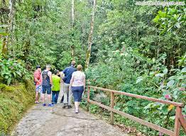 Botanical Gardens Highland Park Entree Kibbles Botanical Garden Part Of Kinabalu Park And Poring