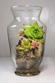 446 best terrariums images on pinterest terrarium ideas plants
