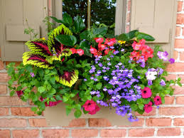 Porch Rail Flower Boxes by Hanging Basket For Porch Railing Front Garden Pinterest