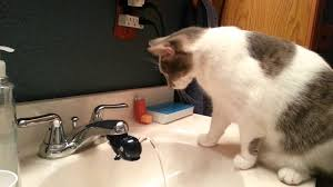 cat and his whale drinking fountain youtube