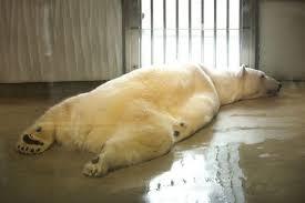 fake polar bear rug with head rugs ideas