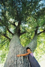 saving our tree article nature reviews genetics