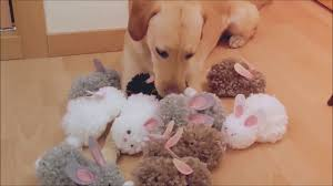 easy crafts for kids puppy dog with wool pompoms chihuahua