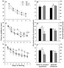 synapsin i and synapsin ii null mice display an increased age