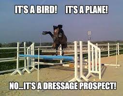 Horse Riding Meme - horseback riding thecluelessbutcuriousrider