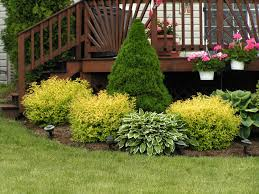 landscaping evergreen plants for front yard trees and shrubs ideas