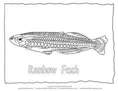 tahoe trout colouring pages 2 fish coloring sheet trout