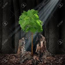 life renewal and recovery concept as a green leaf tree shaped