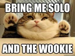 Thanksgiving Cat Meme - thanksgiving cat memes cat best of the funny meme