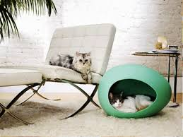 cat house design beautiful green color with nice home decoration